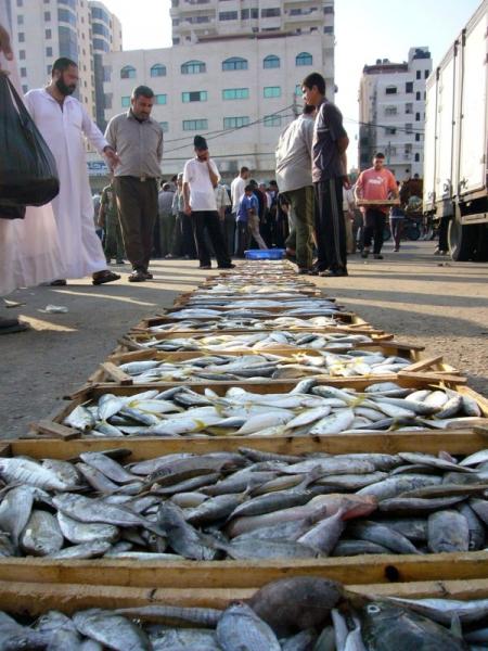 Fischmarkt von Gaza