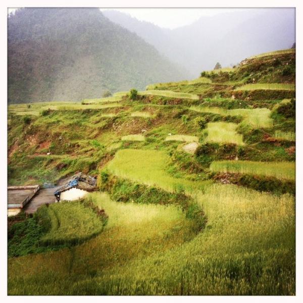 Die Bauern leben von ihren Weizen- und Reisfeldern